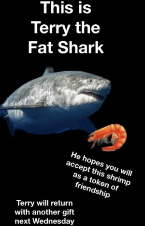 Shark, Wednesday, and Fat: This is  Terry the  Fat Shark  He hopes you will  accept this shrimp  as a token of  friendship  Terry will return  with another gift  next Wednesday Terry will never stop giving