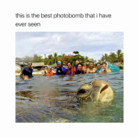 lmao: this is the best photobomb that i have  ever seen lmao