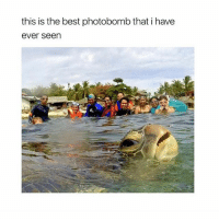 photobombing: this is the best photobomb that i have  ever seen