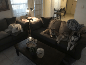 This is the best picture of my puppers i have ever gotten in 3 years and i am so happy that i now have a picture to be able to show people all my dogs in one.: This is the best picture of my puppers i have ever gotten in 3 years and i am so happy that i now have a picture to be able to show people all my dogs in one.