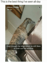 Dogs, Best, and Looking: This is the best thing lve seen all day  Mature Cheddar  28m ago  Even though my dogs blind, he still likes  to look out the window
