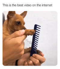 Internet, Ironic, and Best: This is the best video on the internet Sound on 🤣🐶🔥