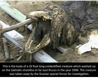 Memes, Smh, and Taken: This is the body of a 20 foot long unidentified creature which washed up  on the Sakhalin shoreline in far east Russia in the year 2006. The creature  was taken away by the Russian special forces for investigation. Of course Russia smh ~Matt