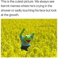 Crying, Memes, and Shower: This is the cutest picture. We always see  Kermit memes where he's crying in the  shower or sadly touching his face but look  at the growth.  dreamslikejo