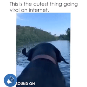 Internet, Dog, and Song: This is the cutest thing going  viral on internet  SOUND ON 🔊 SOUND ON! 🔊 Nothing could perfectly synced to this song than this dog's ear. 🤣🤣🤣 Tag a friend who should see this.