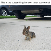Animals, Cute, and Cute Animals: This is the cutest thing I've ever taken a picture of SWIPE & TAG ❤️ follow me @v.cute.animals 👈👈 @_theblessedone