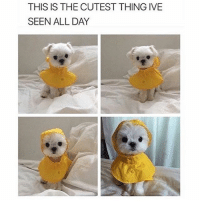 Memes, Rain, and 🤖: THIS IS THE CUTEST THING IVE  SEEN ALL DAY RAIN BORK !!! - Max textpost textposts