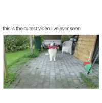 Dancing, Heart, and Video: this is the cutest video i've ever seen this dog is dancing it's way into my heart