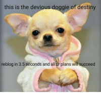 Destiny, Will, and All: this is the devious doggie of destiny  reblog in 3.5 seconds and all ur plans will succeed