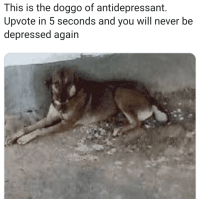 the-memedaddy:  meirl  You wanna bet? Fucking watch me. *backflips into depression*: This is the doggo of antidepressant.  Upvote in 5 seconds and you will never be  depressed again the-memedaddy:  meirl  You wanna bet? Fucking watch me. *backflips into depression*