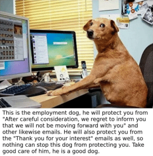 "me irl: This is the employment dog, he will protect you from  ""After careful consideration, we regret to inform you  that we will not be moving forward with you"" and  other likewise emails. He will also protect you from  the ""Thank you for your interest"" emails as well, so  nothing can stop this dog from protecting you. Take  good care of him, he is a good dog. me irl"