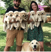 Life, Puppies, and Now: This is the exact amount of puppies I need in my life.