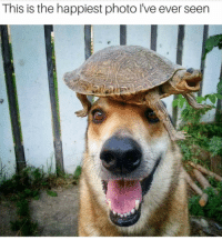 Turtle, Photo, and Hat: This is the happiest photo l've ever seen '''Turtle hat''''