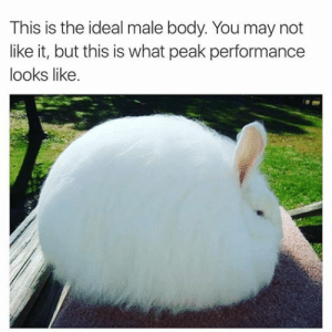 Idealizer: This is the ideal male body. You may not  like it, but this is what peak performance  looks like.