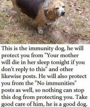 "Tumblr, Blog, and Good: This is the immunity dog, he will  protect vou from ""Your mother  will die in her sleep tonight if you  don't reply to this"" and other  likewise posts. He will also protect  vou from the ""No immunities  posts as well, so nothing can stop  this dog from protecting you. Take  good care of him, he is a good dog awesomacious:  Protector Doggo"
