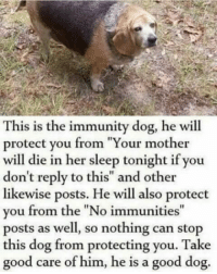 "Tumblr, Blog, and Good: This is the immunity dog, he will  protect you from ""Your mother  will die in her sleep tonight if you  don't reply to this"" and other  likewise posts. He will also protect  you from the ""No immunities""  posts as well, so nothing can stop  this dog from protecting you. Take  good care of him, he is a good dog. <p><a href=""http://awesomacious.tumblr.com/post/171182594827/he-protec"" class=""tumblr_blog"">awesomacious</a>:</p>  <blockquote><p>He protec</p></blockquote>"