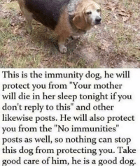 "Memes, Good, and Sleep: This is the immunity dog, he will  protect you from ""Your mother  will die in her sleep tonight if you  don't reply to this"" and other  likewise posts. He will also protect  you from the ""No immunities  posts as well, so nothing can stop  this dog from protecting you. Take  good care of him, he is a good dog Immunity doggo via /r/memes https://ift.tt/2Ch6iaY"