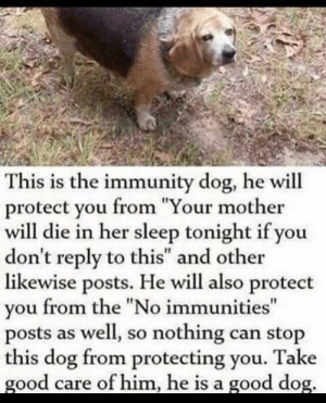 "Memes, Good, and Sleep: This is the immunity dog, he will  protect you from ""Your mother  will die in her sleep tonight if you  don't reply to this"" and other  likewise posts. He will also protect  you from the ""No immunities""  posts as well, so nothing can stop  this dog from protecting you. Take  good care of him, he is a good dog. We need a spooktober version of this, doot. via /r/memes https://ift.tt/2CF1DhI"