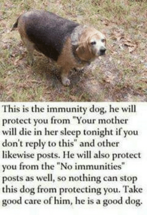 "Target, Tumblr, and Blog: This is the immunity dog, he will  protect you from Your mother  will die in her sleep tonight if you  don't reply to this"" and other  likewise posts. He will also protect  vou from the ""No immunities  posts as well, so nothing can stop  this dog from protecting you. Take  good care of him, he is a good dog. trugemstory:  Spread"