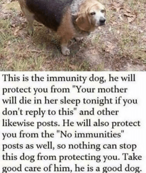 "Dank, Memes, and Target: This is the immunity dog, he will  protect you from ""Your mother  will die in her sleep tonight if you  don't reply to this"" and other  likewise posts. He will also protect  you from the ""No immunities  posts as well, so nothing can stop  this dog from protecting you. Take  good care of him, he is a good dog Immunity doggo by forkingbread MORE MEMES"