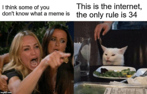 @memes: This is the internet,  the only rule is 34  I think some of you  don't know what a meme is  imgflip.com @memes