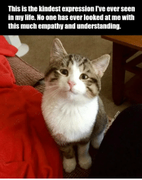 Life, Empathy, and Understanding: This is the kindest expression I've ever seen  in my life. No one has ever looked at me with  this much empathy and understanding. Kitty loves you.