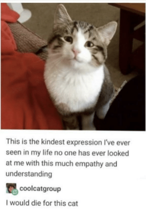 Made me smile:): This is the kindest expression I've ever  seen in my life no one has ever looked  at me with this much empathy and  understanding  coolcatgroup  I would die for this cat Made me smile:)