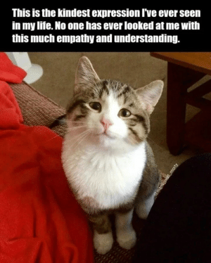 Fresh, Life, and Coffee: This is the kindest expression I've ever seen  in my life. No one has ever looked at me with  this much empathy and understanding.  @mami and morty These will go great with your fresh morning coffee.#catmemes #funnymemes #dogmemes #animalmemes #funnyanimals #funnycats #funnydogs