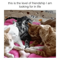 Life, Memes, and Friendship: this is the level of friendship I am  looking for in life  @bustle tag ur besties 💖
