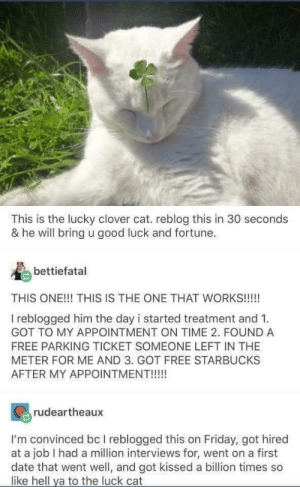 Friday, Starbucks, and Date: This is the lucky clover cat. reblog this in 30 seconds  & he will bring u good luck and fortune.  bettiefatal  THIS ONE!!! THIS IS THE ONE THAT WORKS!!!!!  I reblogged him the day i started treatment and 1  GOT TO MY APPOINTMENT ON TIME 2. FOUND A  FREE PARKING TICKET SOMEONE LEFT IN THE  METER FOR ME AND 3. GOT FREE STARBUCKS  AFTER MY APPOINTMENT!!!  rudeartheaux  I'm convinced bc I reblogged this on Friday, got hired  at a job I had a million interviews for, went on a first  date that went well, and got kissed a billion times so  like hell ya to the luck cat Crossposting is reddits reblog