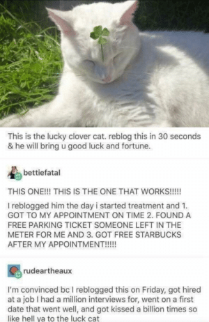 Their stories are wholesome: This is the lucky clover cat. reblog this in 30 seconds  & he will bring u good luck and fortune  bettiefatal  THIS ONE!!! THIS IS THE ONE THAT WORKS!!!!  I reblogged him the day i started treatment and 1  GOT TO MY APPOINTMENT ON TIME 2. FOUND A  FREE PARKING TICKET SOMEONE LEFT IN THE  METER FOR ME AND 3. GOT FREE STARBUCKS  AFTER MY APPOINTMENT!!!!!  rudeartheaux  I'm convinced bc I reblogged this on Friday, got hired  at a job I had a million interviews for, went on a first  date that went well, and got kissed a billion times so  like hell ya to the luck cat Their stories are wholesome