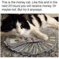 money cat: This is the money cat. Like this and in the  next 24 hours you will receive money. Or  maybe not. But try it anyways