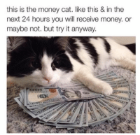 White Dad: this is the money cat. like this & in the  next 24 hours you will receive money. or  maybe not. but try it anyway. White Dad