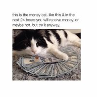 @ money come my way: this is the money cat. like this & in the  next 24 hours you will receive money. or  maybe not. but try it anyway. @ money come my way