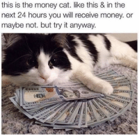 Money: this is the money cat. like this & in the  next 24 hours you will receive money. or  maybe not. but try it anyway.
