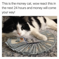 ~Kingslayer from: Your Tumblr Dealer  Checkout We Post GIFs: This is the money cat, wow react this in  the next 24 hours and money will come  your way! ~Kingslayer from: Your Tumblr Dealer  Checkout We Post GIFs