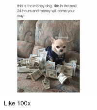 Money Dog: this is the money dog, like in the next  24 hours and money will come your  way!!  me  00L  OO1  0z  Like 100x