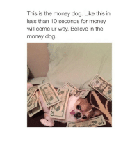 Dogs, Money, and Girl Memes: This is the money dog. Like this in  less than 10 seconds for money  will come ur way. Believe in the  money dog. my face when i see money