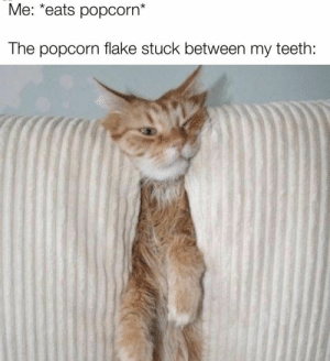 This is the most annoying sensation, hands down. #Memes #Cats #Animals #Annoying #Popcorn: This is the most annoying sensation, hands down. #Memes #Cats #Animals #Annoying #Popcorn
