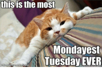 tuesday: this is the most  Monday est  Tuesday EVER  cataddictsamony mouse