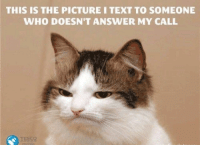 Cats, Definitely, and Memes: THIS IS THE PICTURE I TEXT TO SOMEONE  WHO DOESN'T ANSWER MY CALL  TESCO These memes will definitely lift your spirits. #Cats #FunnyMemes #RandomMemes