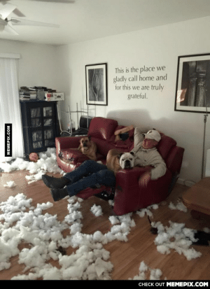 Husband & dogs like this…omg-humor.tumblr.com: This is the place we  gladly call home and  for this we are truly  grateful.  ATAY  CHECK OUT MEMEPIX.COM  MEMEPIX.COM Husband & dogs like this…omg-humor.tumblr.com