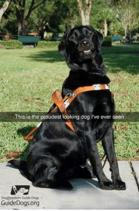 :E: This is the proudest looking dog l've ever seen  Southeastern Guide Dogs  GuideDogs.org :E