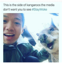 Funny, Kangaroo, and Kangaroos: This is the side of kangaroos the media  don't want you to see  Staywoke😂😂👇🏾