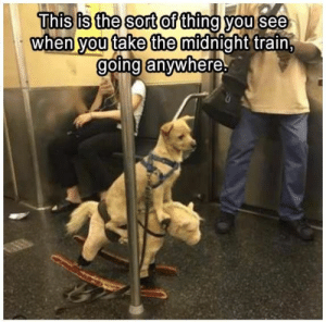 Animals, Funny, and Memes: This is the sort of thing you see  when you take the midnight train,  going anywhere 42 Funny Dog Memes That'll Make Your Day! - Lovely Animals World