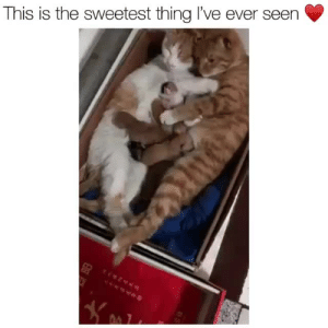 Tumblr, Blog, and Heart: This is the sweetest thing l've ever seen babyanimalgifs:This melted my heart ❤️