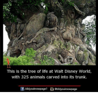 tree of life: This is the tree of life at Walt Disney World,  with 325 animals carved into its trunk.  /didyouknowpage1  @didyouknowpage