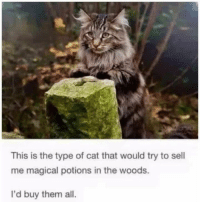 Take my money! 😂😂😂: This is the type of cat that would try to sell  me magical potions in the woods.  I'd buy them all. Take my money! 😂😂😂