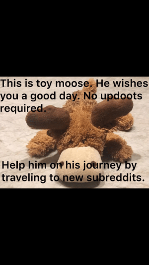 Help him! 🦌: This is toy moose. He wishes  you a good day. No updoots  required.  Help him on his journey by  traveling to new subreddits. Help him! 🦌