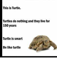 This is Turtle.  Turtles do nothing and they live for  150 years  Turtle is smart  Be like turtle Be like him